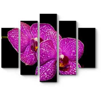 Модульная картина Тропическая орхидея