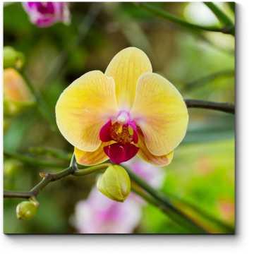 Тропическая орхидея, цветущая в летнем саду