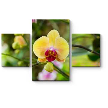 Модульная картина Тропическая орхидея, цветущая в летнем саду