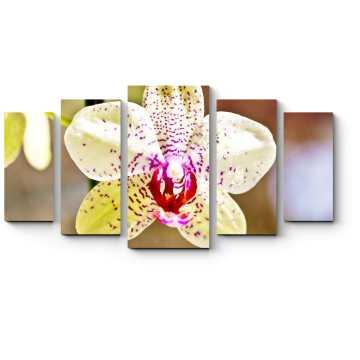 Модульная картина Тигровая орхидея