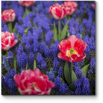Цветение красок весны