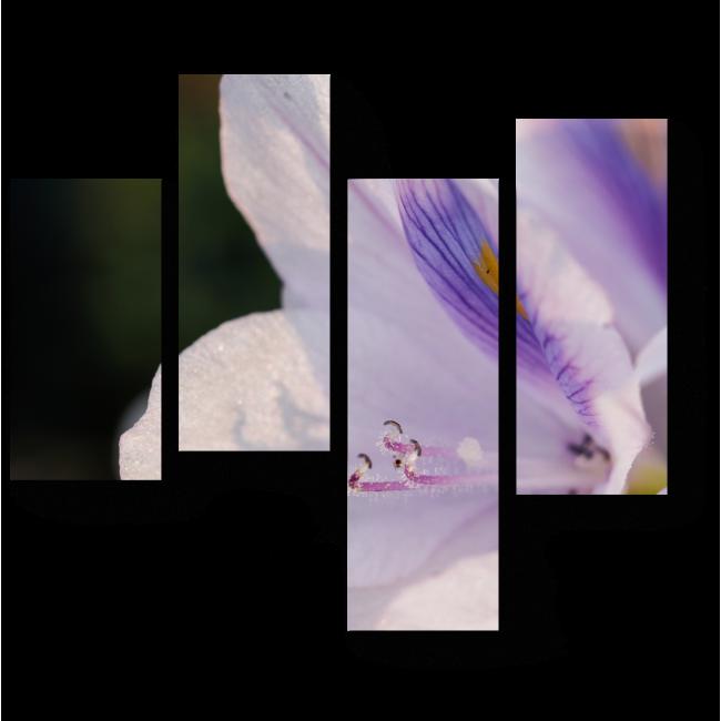 Модульная картина Бутон гиацинта