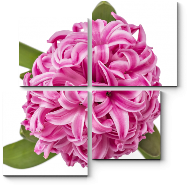 Модульная картина Розовый гиацинт