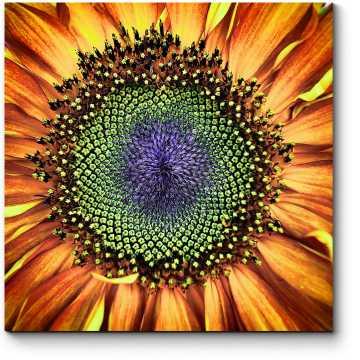 Модульная картина Внутри цветка солнца
