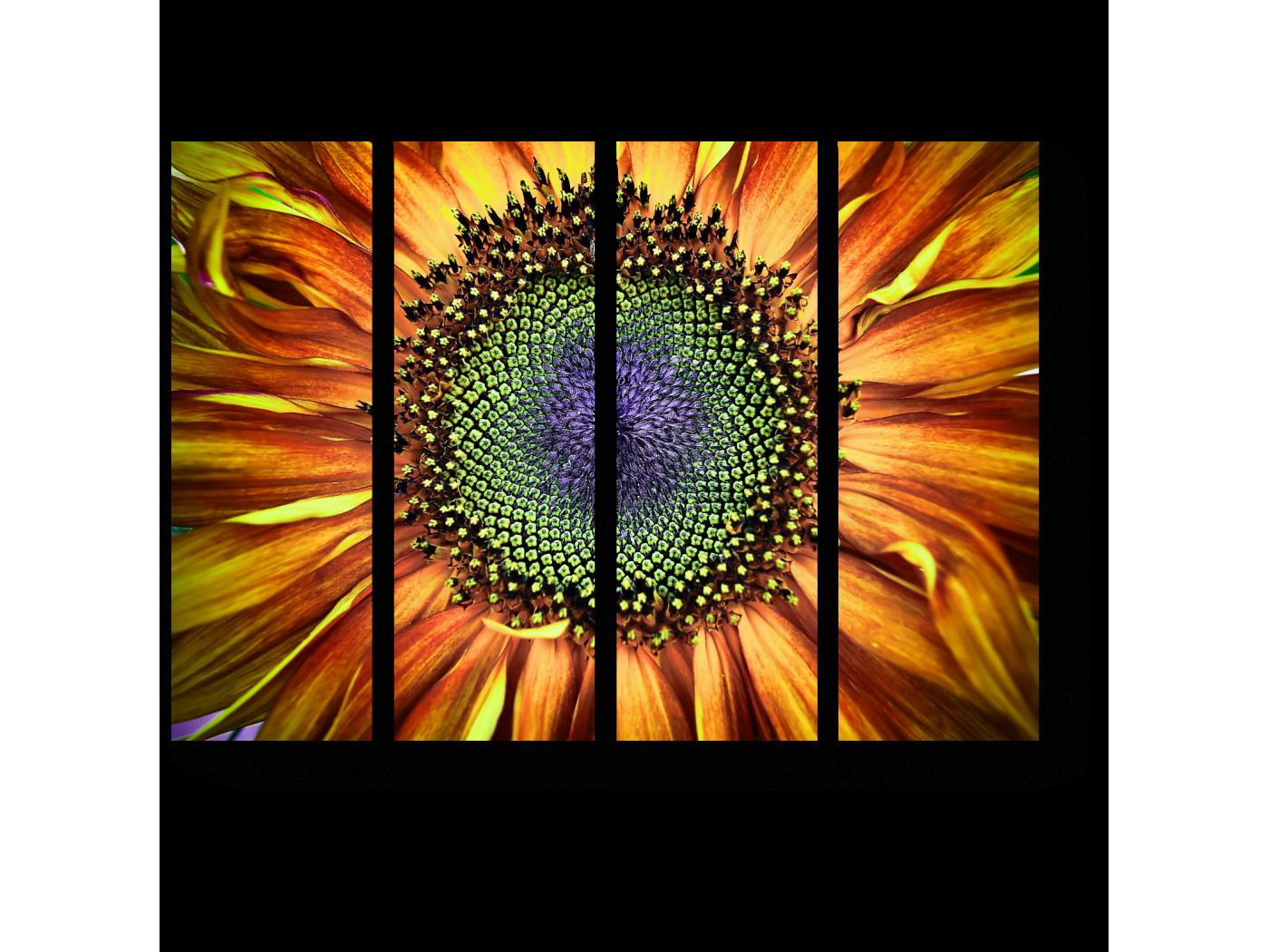 Модульная картина Внутри цветка солнца (60x45) фото