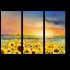 Подсолнуховое поле в лучах солнца