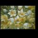 Первые цветы весны в прозрачной вазе