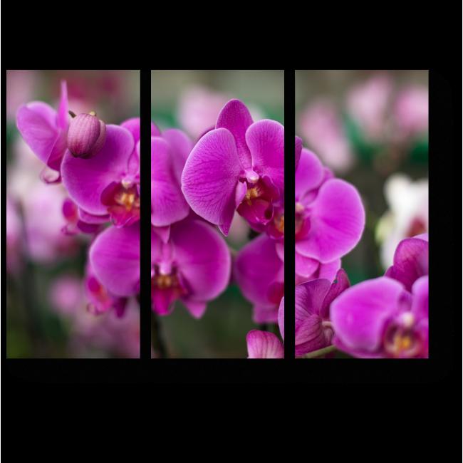 Модульная картина Прекрасные и нежные орхидеи