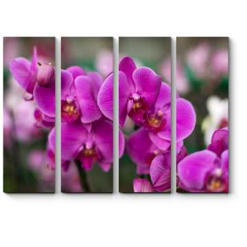Прекрасные и нежные орхидеи