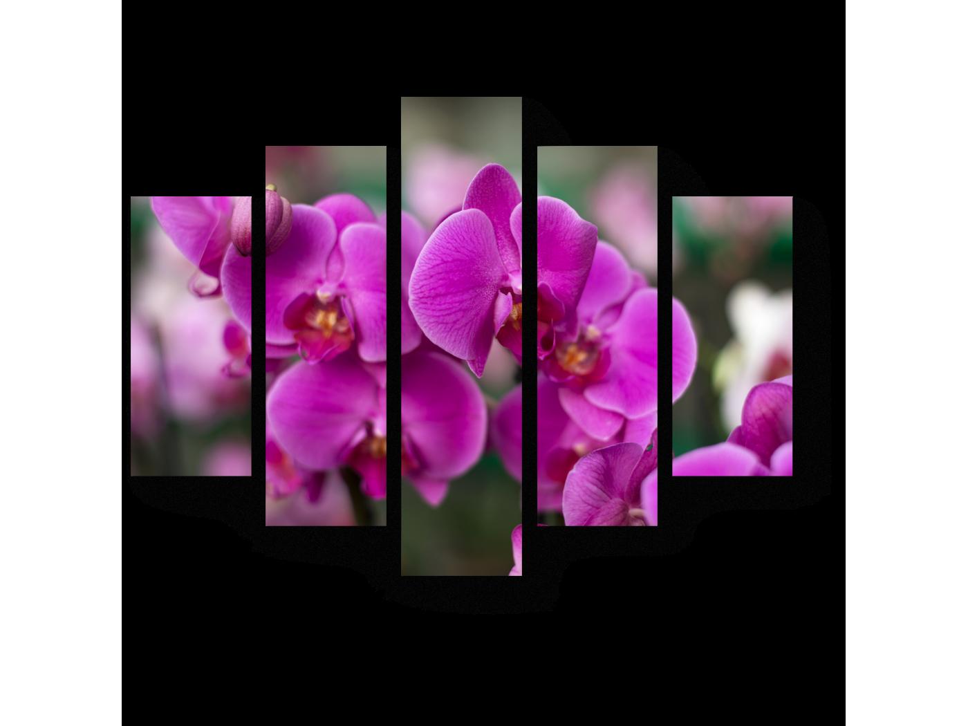 картина для распечатки орхидея этом фильме много