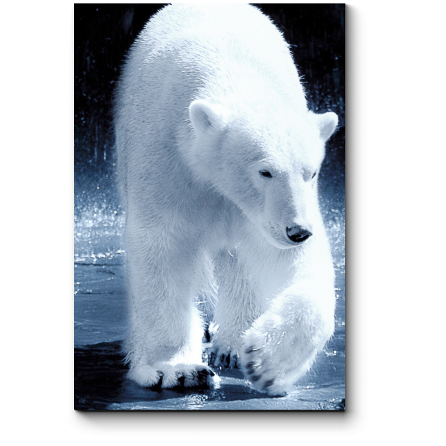 Модульная картина Белый полярный красавец