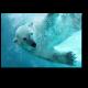 Белый полярный исследователь