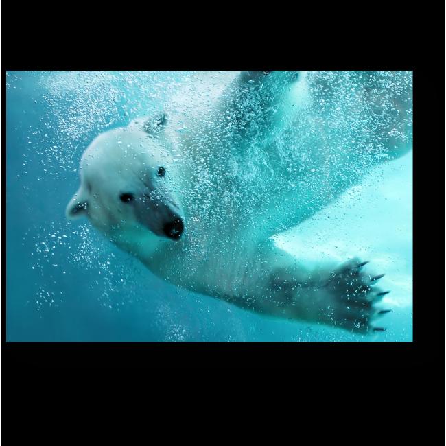 Модульная картина Белый полярный исследователь