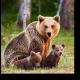 Семья очаровательных медведей