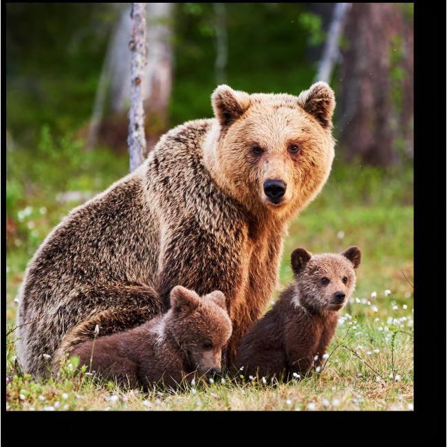 Модульная картина Семья очаровательных медведей