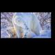 Семейная прогулка полярных медведей