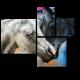 Влюбленная пара лошадей