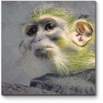 Обаятельная обезьянка