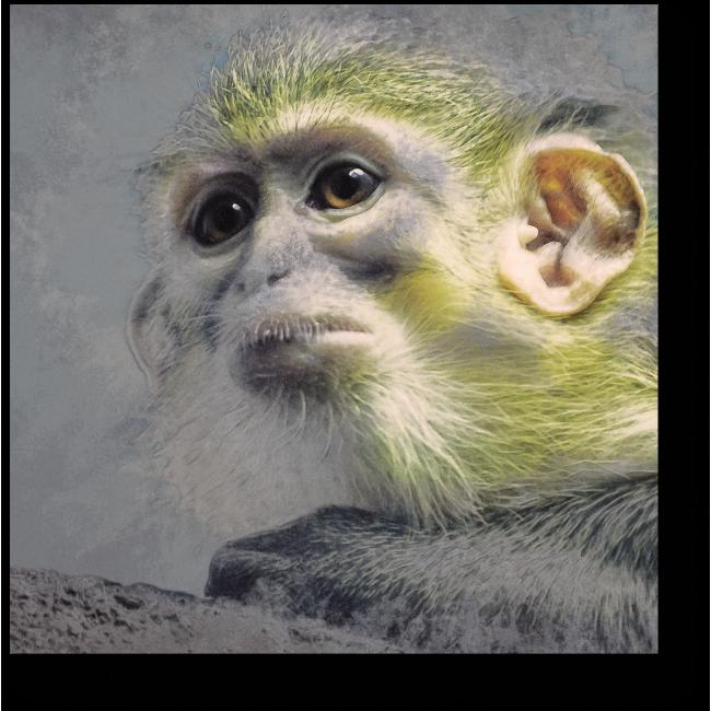 Модульная картина Обаятельная обезьянка