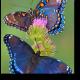 Чарующие бабочки на цветке
