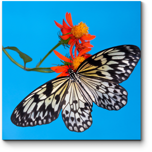 Модульная картина Бабочка на алом бутоне