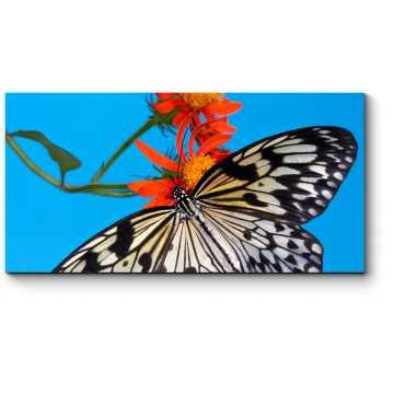 Бабочка на алом бутоне