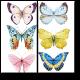 Радужные бабочки
