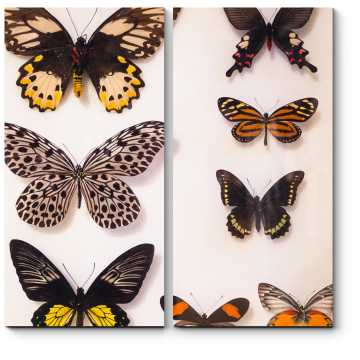 Модульная картина Разноцветные бабочки