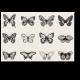 Черно-белые бабочки