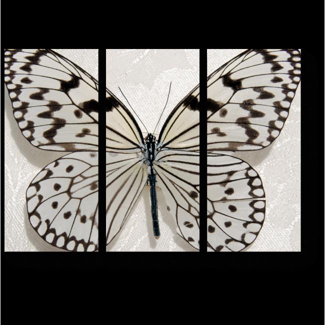 Модульная картина Черно-белая бабочка