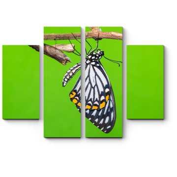 Модульная картина Один день из жизни бабочки