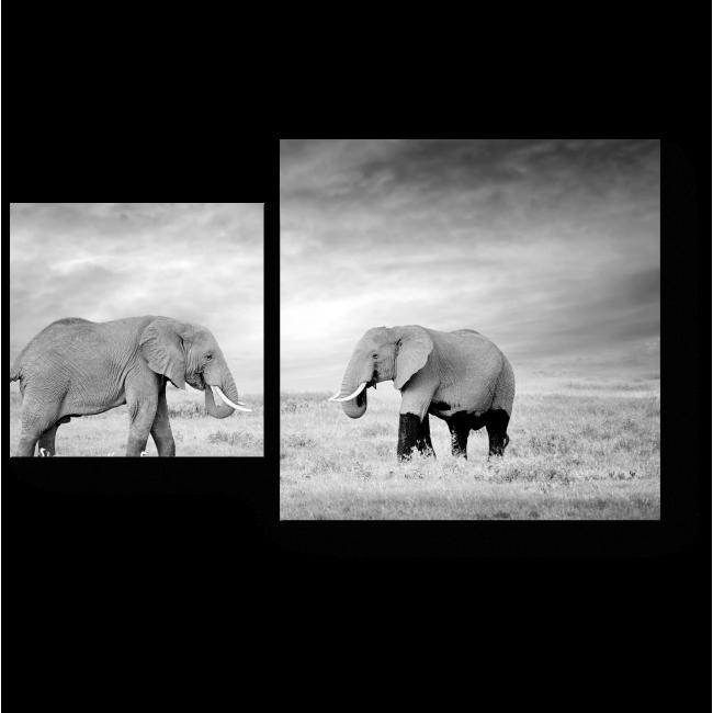 Модульная картина Слоны в национальном парке