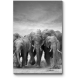 Слоны на озере