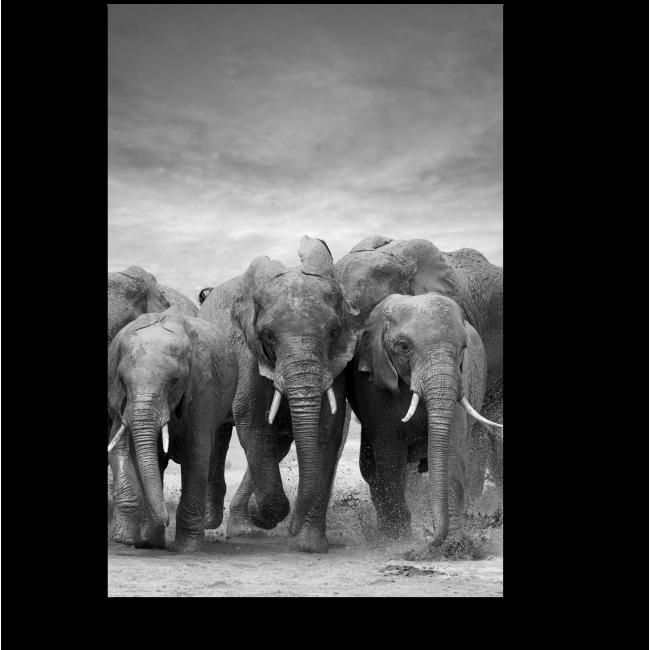 Модульная картина Слоны на озере