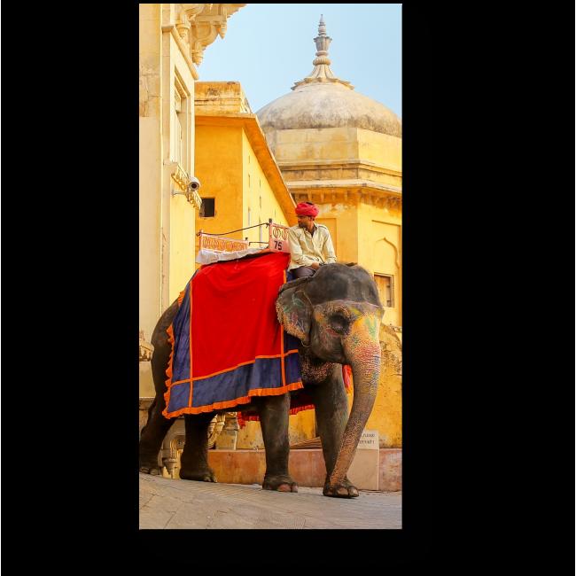 Модульная картина Индийский слон