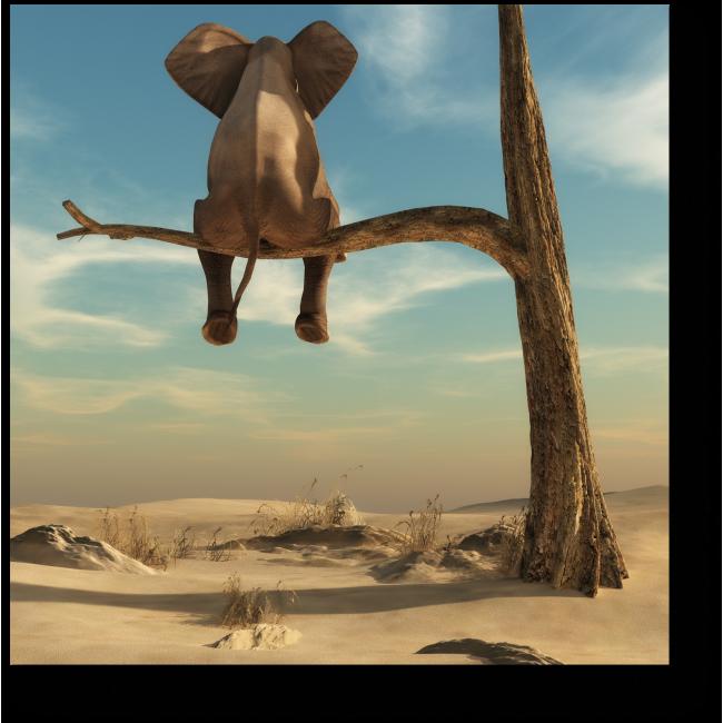 Модульная картина Слон любуется на облака
