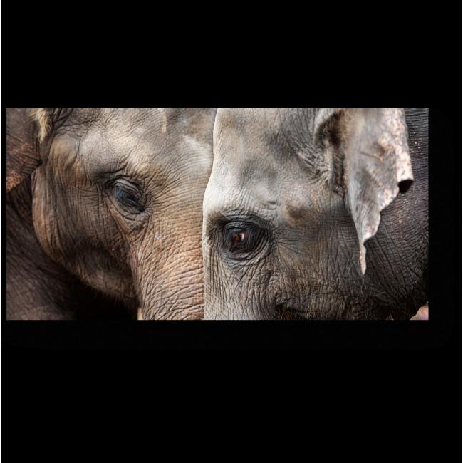 Модульная картина Любовь слонов