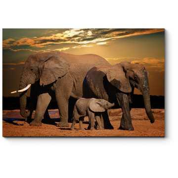 Семейная прогулка слонов