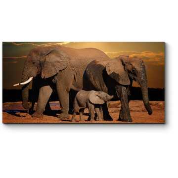 Модульная картина Семейная прогулка слонов