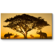 Слоны встретились на закате