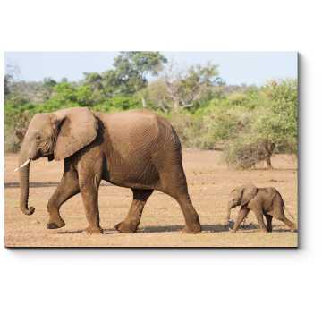 Модульная картина Слононек и мама