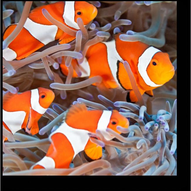 Модульная картина Подводные клоуны