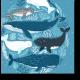 Веселые морские обитатели