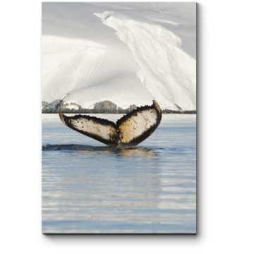 Пара влюбленных китов