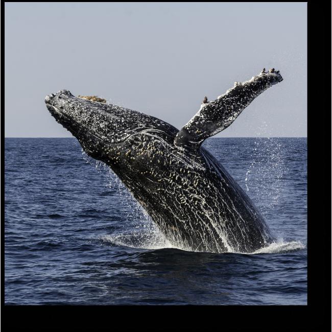 фоторедактор выпрыгивает кит в картинке также позволяет