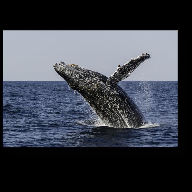 Модульная картина Прыжок кита