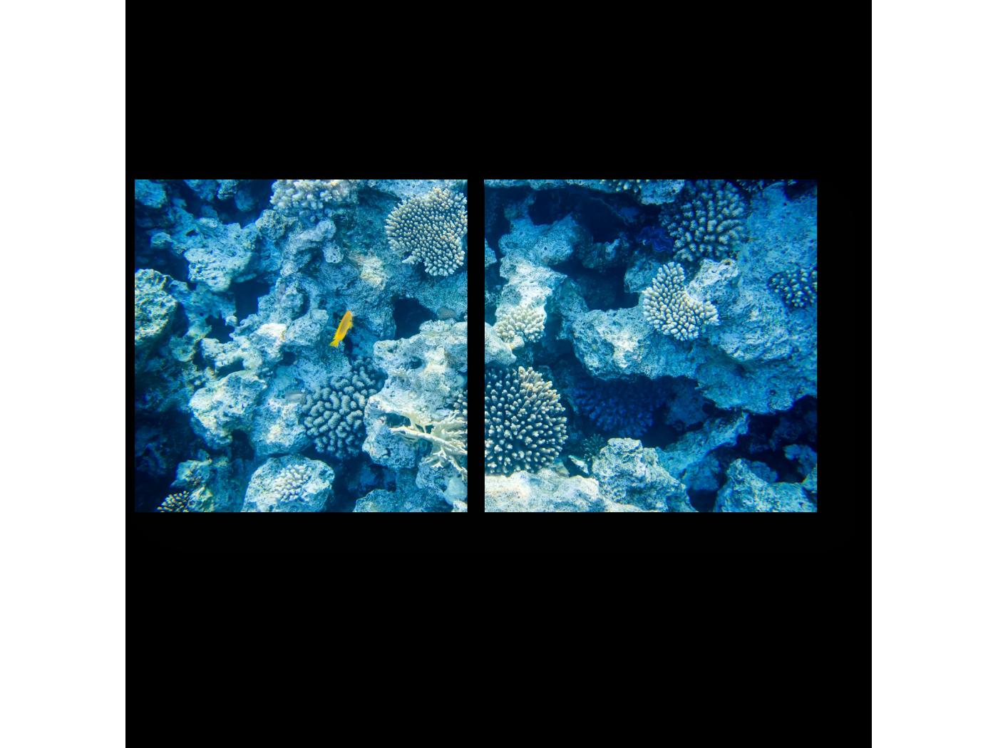 Модульная картина Коралловые рифы (40x20) фото