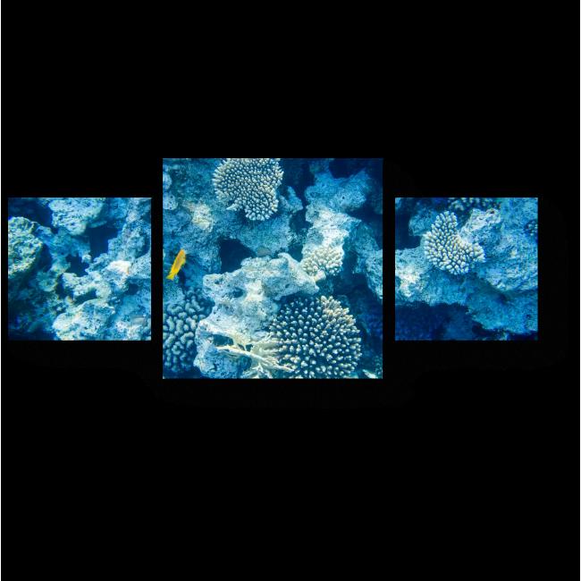 Модульная картина Коралловые рифы
