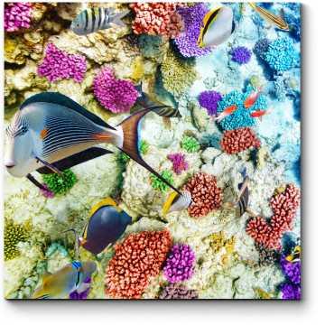 Яркое подводное царство