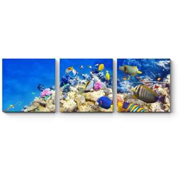 Модульная картина Яркие краски подводного мира
